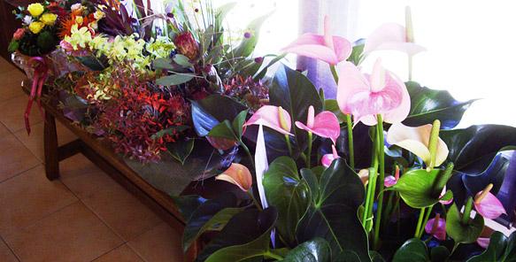オープンのお祝いにいただいたお花