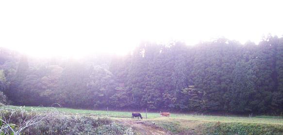 周囲を森に囲まれた放牧地