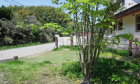 庭のヤマボウシ