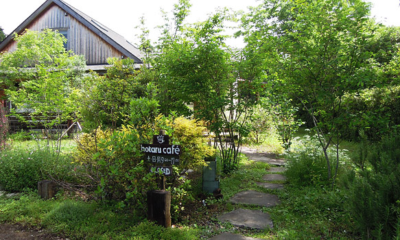 庭の木々も、ホタルカフェと共に育ってきました。