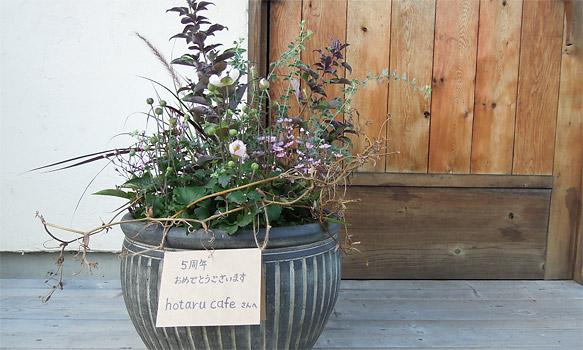 アトリエ・アキの吉見先生から、5周年のお祝いにいただいた寄せ鉢